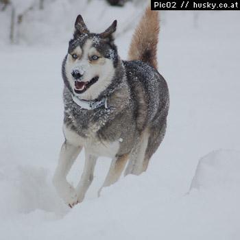 http://www.husky.co.at/uploads/images/inhalt/013.jpg