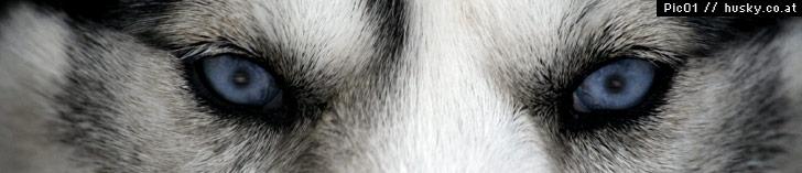 http://www.husky.co.at/uploads/images/kopf/002.jpg